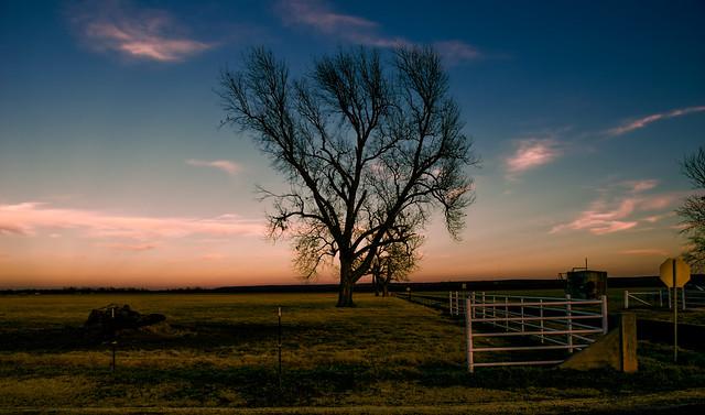 Lone Tree-Edit.jpg