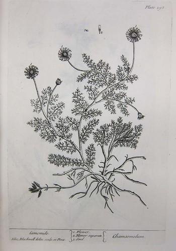 herbal111