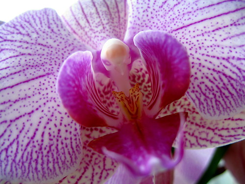 Beautiful Orchid | by robbie jim