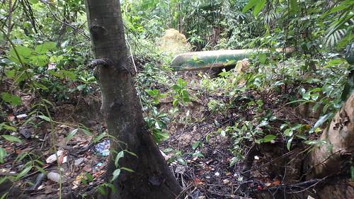 Bakau mata buaya (Bruguiera hainesii) with kayak stored nearby