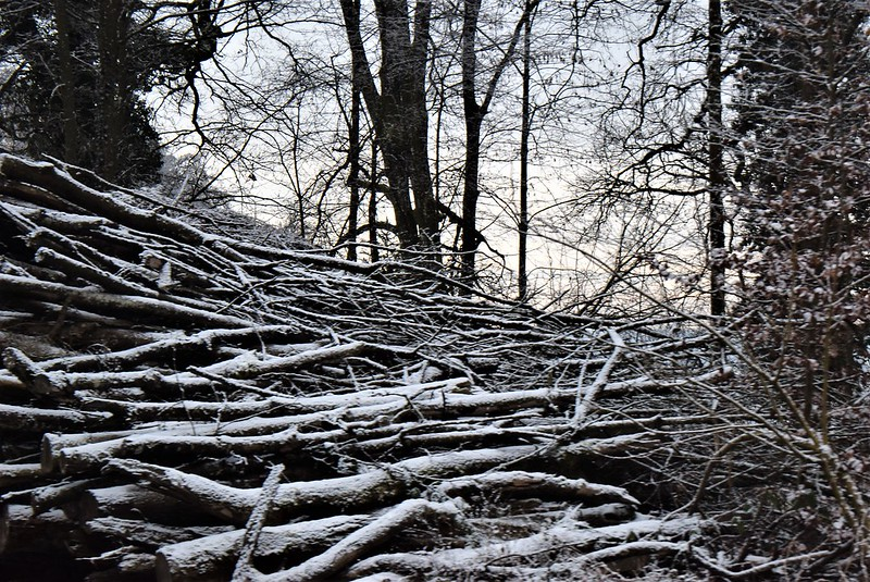 Wood piles 04.01 (2)