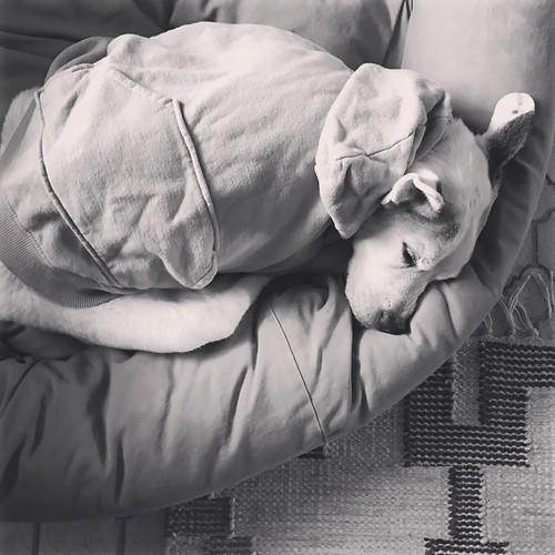 Sunday snowstorm sleepy sweetie