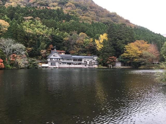 看到金鱗湖的湖面第一直覺想到花蓮鯉魚潭XD