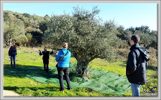 Un día en Ahigal de los Aceiteros haciendo oleoturismo 10