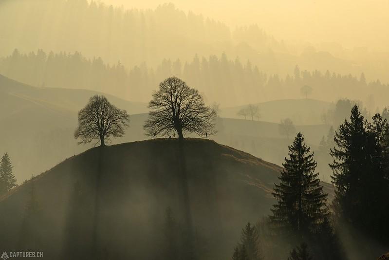Fog in the hills - Langnau