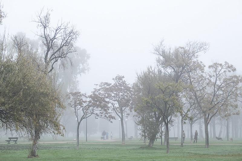 Paseantes en la niebla
