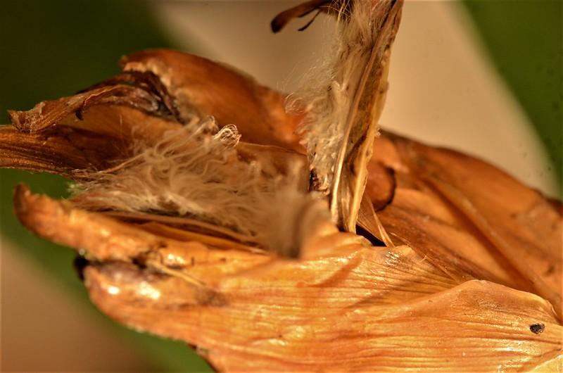 Bromelia 11.12 (3)