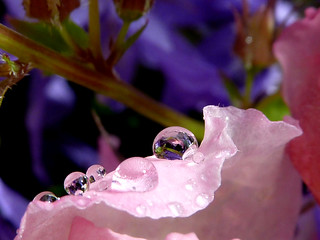 The last droplets ...for now... | by Mirthe Duindam