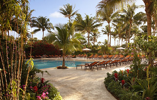 Tropical Foliage Surrounding the Pool | by thepalmshotel