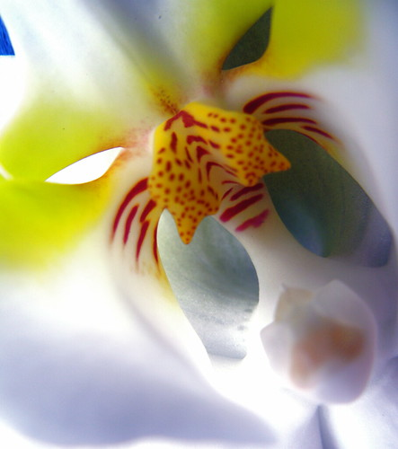 It's cooler. Is the AC on orchid it be Fall? | by kevin dooley