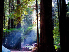 Sunrays pierce the redwood canopy of our campground | by tibchris