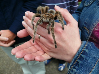 Charlotte the Tarantula and Gin | by garethfw