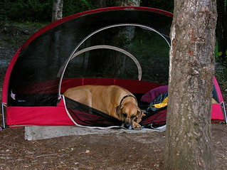Camp Dog | by Laertes