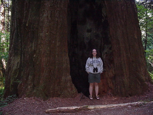 Lori in Redwood