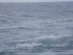 Whale Viewing in Sitka, AK