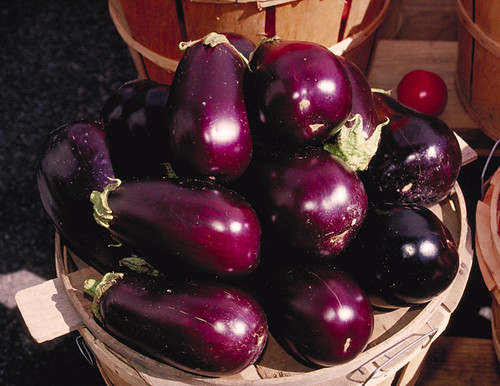 Eggplants | by jayluker