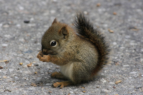 Baby Squirrel | by Odalaigh