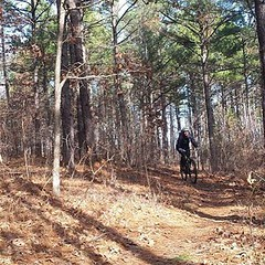 Awesome day on Missouri's Berryman Trail with friends. Winter temps mean mostly frozen trails and great riding weather as long as you kept moving. #mtb #singletrack #mountainbiking #berrymantrail #tothelimit #cyclingstateofmind #marktwainnatlforest