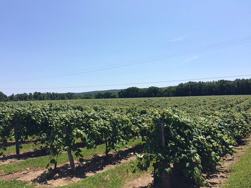 Wine and Cheese Tasting…in Pennsylvania 5