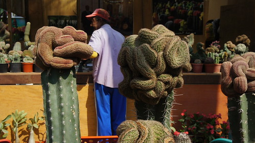 More alien looking cacti