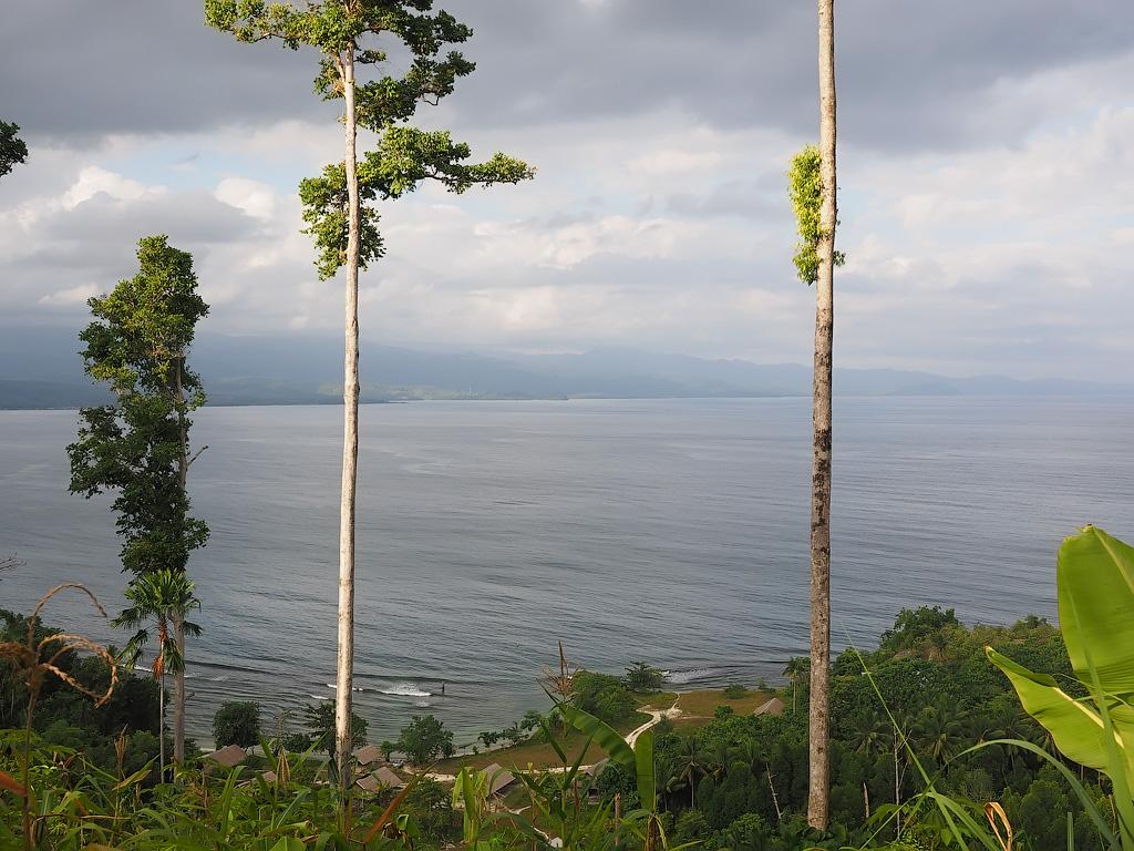 Weda reef and rainforest Resort, Halmahera