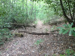 Old Upper Dover Creek Railbed