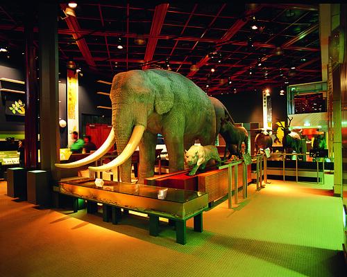 史前館-自然史展廳C2 (2)