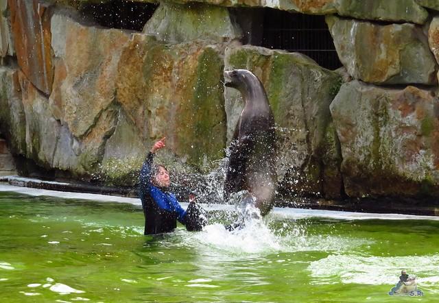 Zoo Berlin 29.04.2016   034