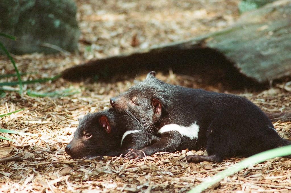 澳洲動物園 Kodak film