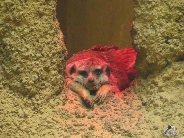 Zoo Berlin 29.04.2016   097