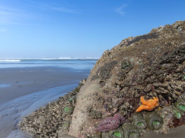 Seesterne und Seeanemonen