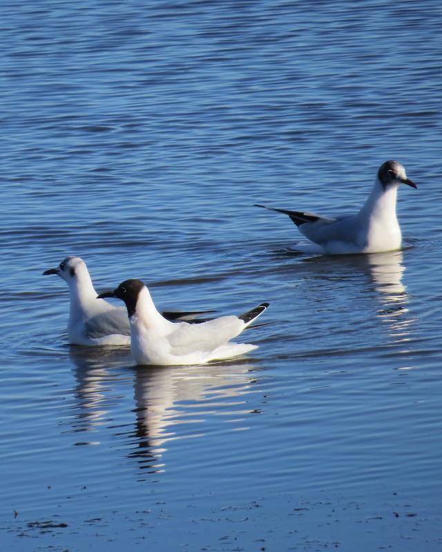 salt-marsh-feb-22-2016 015