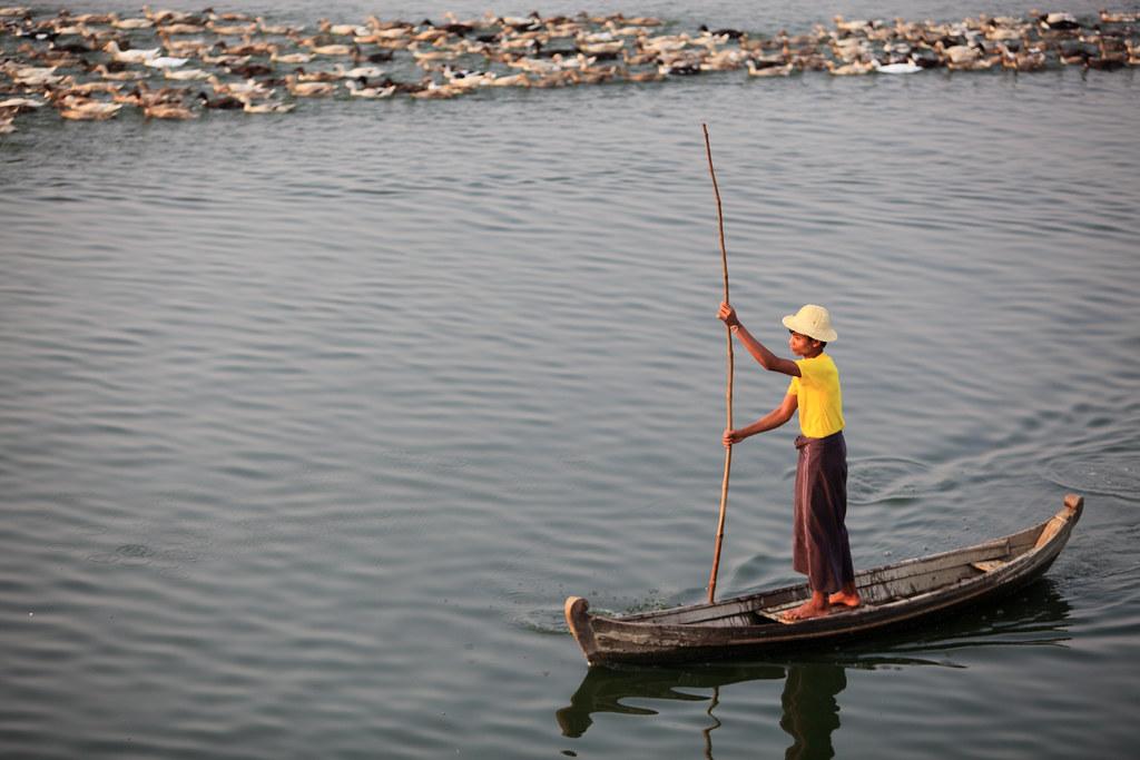 A Burmese Man & His Ducks