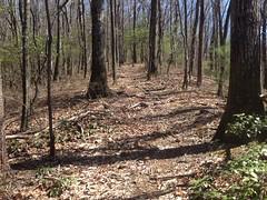 Open Trail