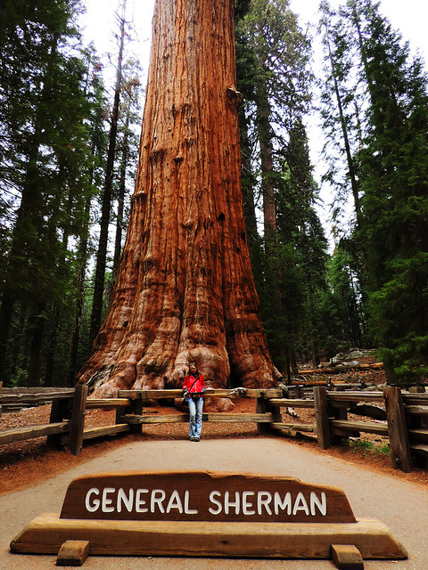 General Sherman, CA, USA