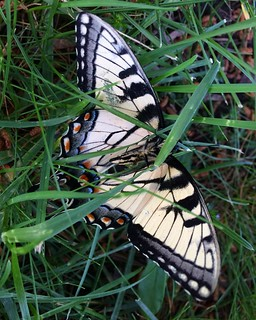 @sheavahid stopped me from stepping on this butterfly.