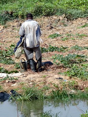 Work in vegetable fields, the niger riverbed