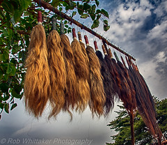 Horse Hair Tails Togo Voodoo