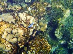 Parque nacional de las islas de Similan