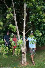 Kauai95.jpg