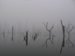 Foggy Illusions by filesfrommike