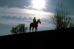 shadow horse by TizianoBelli