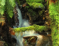 mossy waterfall by pmanley23