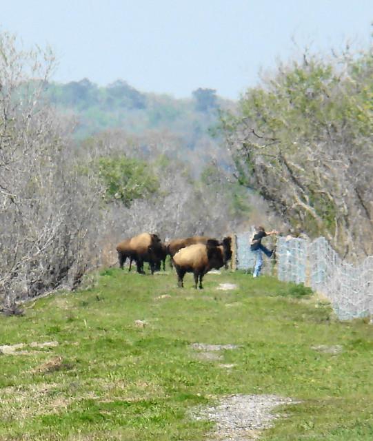 Prairie Preserve State Park Paynes Prairie Preserve State