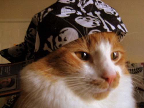 2084627079_25c0995cfe - Pirates of the Catribbean  - Photos Unlimited