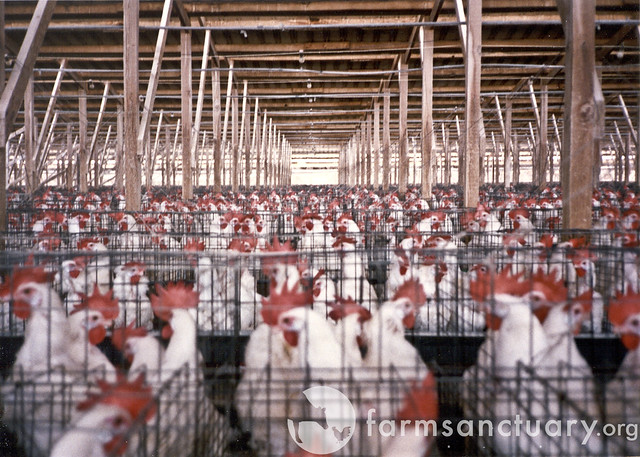 Photo of Poultry Factory Farm