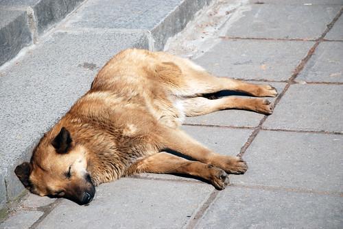 Dogs Dallas Tx For Adoption