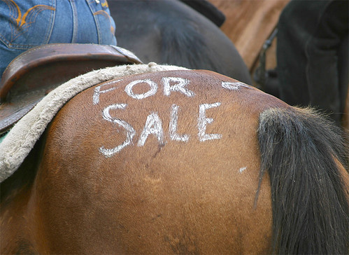 HORSE FOR SALE | by NC Cigany
