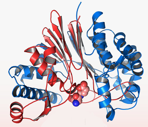 Anthrax CapD Protein Crystal Structure | by Argonne National Laboratory