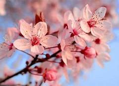 Feliz Quinta Flower!!!! Com novidades à vista... by RETALHOS DE DOÇURA ♥